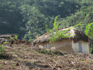 Many households in rural Haiti utilize land near the home for gardens, while nearby hillsides and mountains are managed for wood.