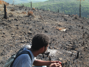 A research collaborator from the University of Haiti's department of ethnology surveys a recently eliminated woodlot. If a farmer intends to continue harvesting wood for charcoal, the stumps are left to coppice; here, the stumps have been burnt to ensure they don't return, indicating that this plot will likely be used for food production for several years to come.