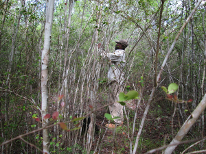 An anthropology student from the state university in Haiti collects plot characteristics from within a managed woodlot.