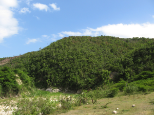 A managed woodlot which, combined with gardens of traditional food crops, create the quilt-like tapestry of land-use that blankets much of the southern peninsula of Haiti. These privately-owned and managed woodlots form the 'charcoalsheds' that populate the rural Haitian energyscape.