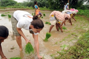 Manual rice transplanting by women's work group (and 1 Wash U student). Andhra Pradesh, 2008