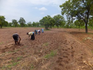 Women sow a groundnut farm in early June