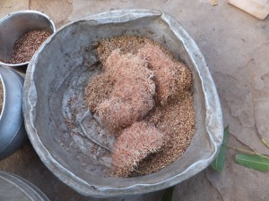 Sorghum is still an important crop for the regional beer. Here the sorghum begins the fermentation process